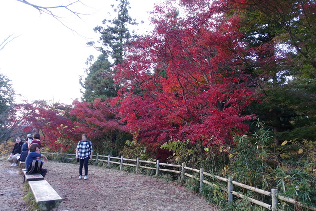 高尾山一丁平付近の紅葉