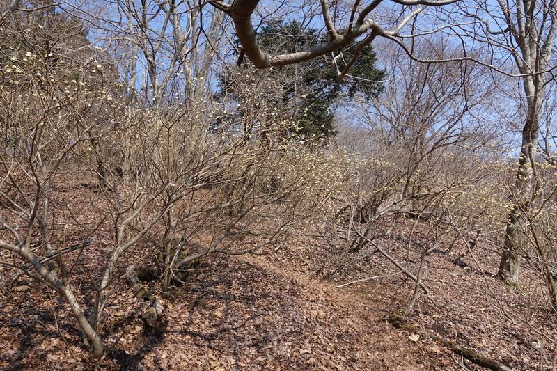 丹沢・ミツバ岳・山頂付近