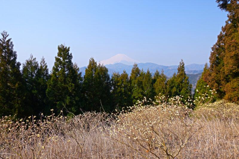 ミツバ岳山頂から富士山