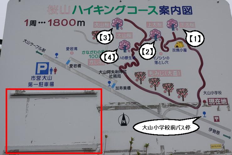 大山桜・ハイキングコーづ案内図