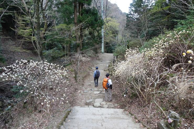 丹沢・大山・ミツマタロード