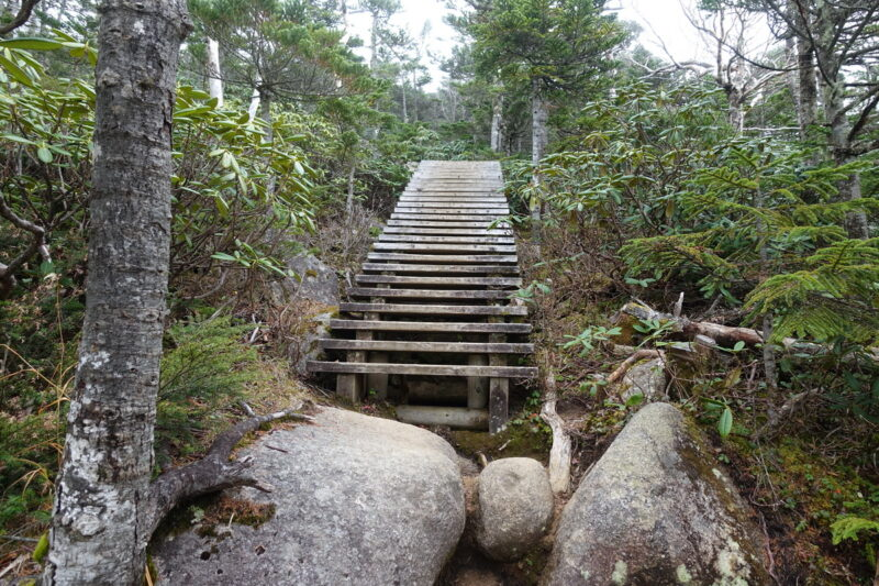 国師ヶ岳への登山道