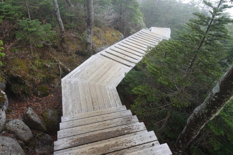 国師ヶ岳の登山道(下り)