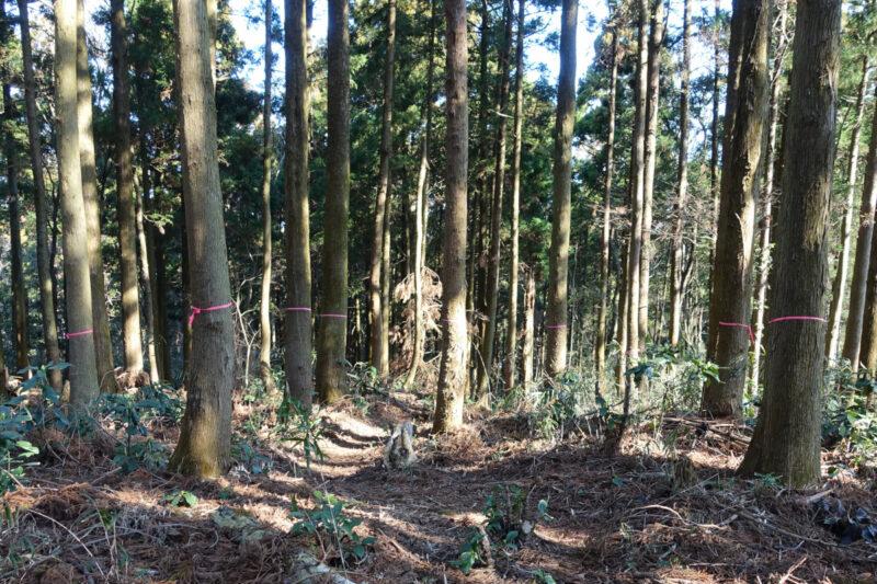 阿部倉山の山頂
