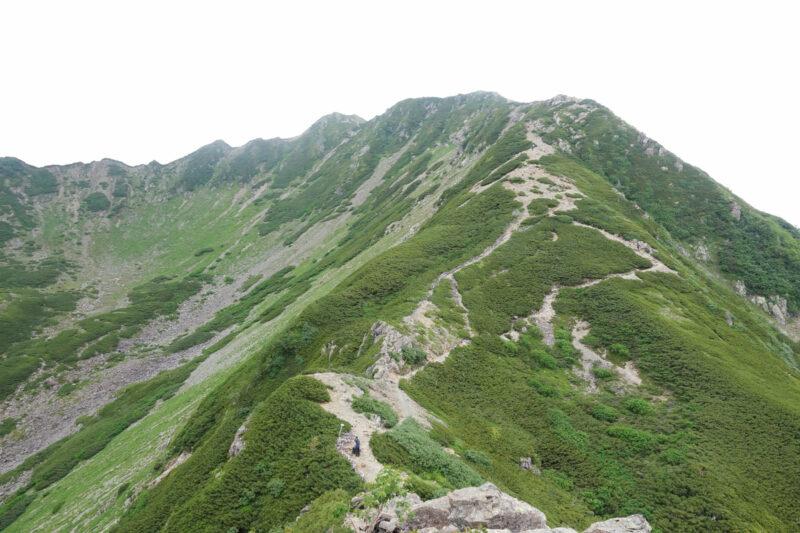 小仙丈岳尾根から望む仙丈ケ岳